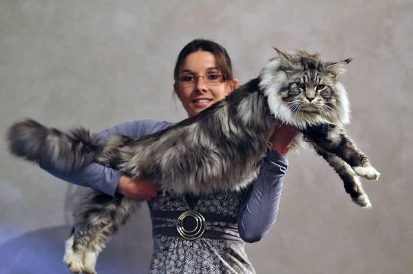 Изображение - Дисплазия тазобедренного сустава у котенка s95211835