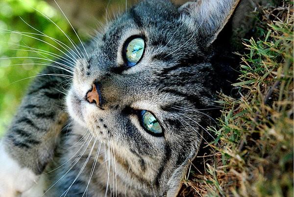 У беременной кошки появились кровяные выделения причины и лечение