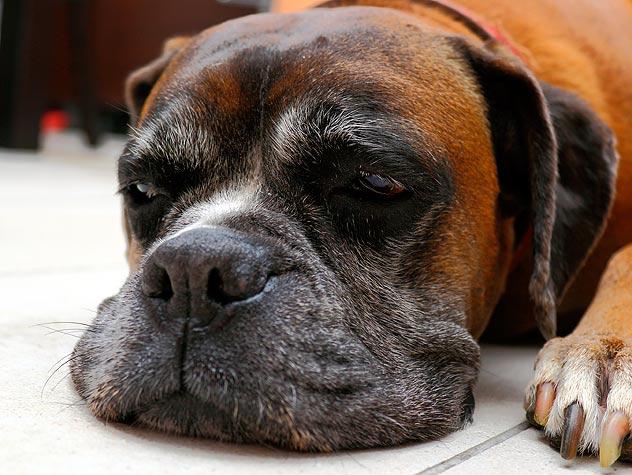 как лечить собаке ревматизм