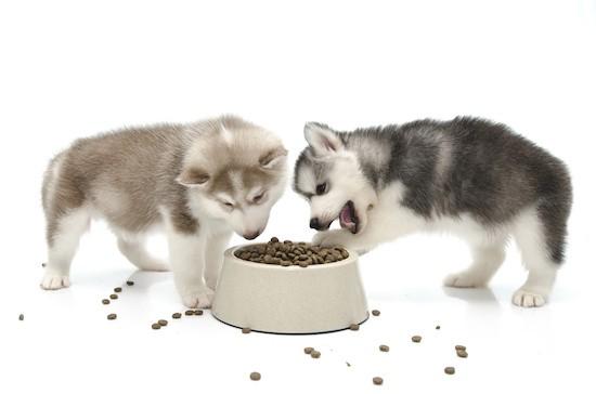 Правильно кормить щенков хаски натуральными продукдео смотреть онлайн