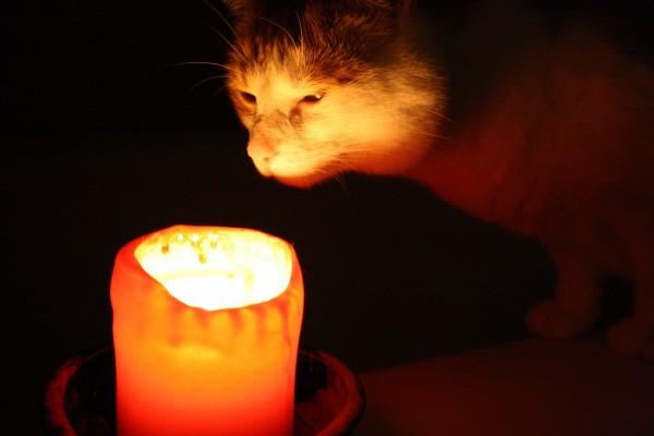 Как вылечить котенка от ожога