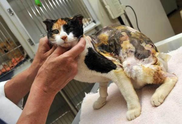 Ожог у кошки лечение в домашних thumbnail