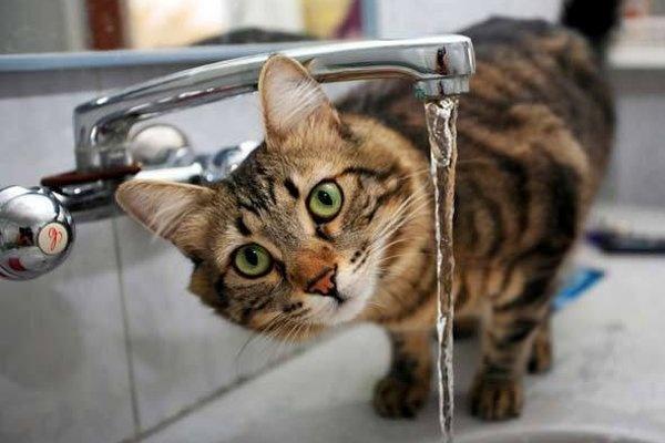 как повысить гемоглобин у кота с хпн