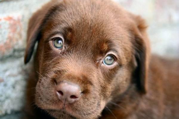 Эхинококкоз у собак – информация о паразите и симптомах