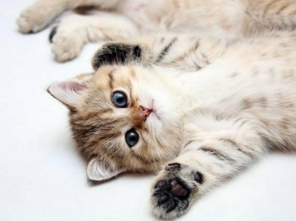 Как правильно кормить котенка в разные периоды его жизни