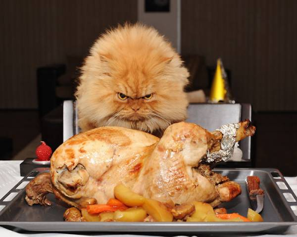 Как правильно кормить кошку натуральное питание или промышленные корма