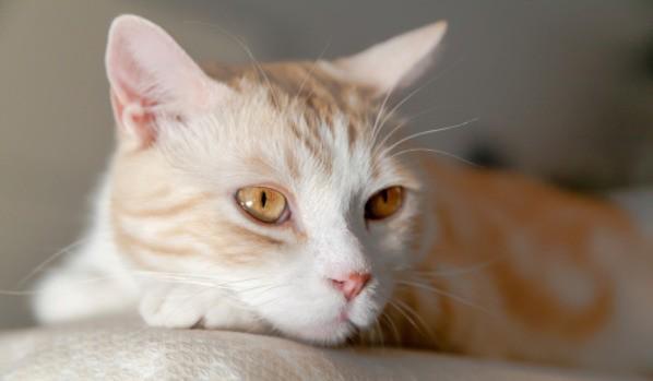Отек мозга у кошки причины симптомы и способы диагностики