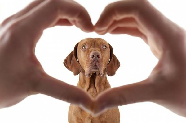 Инфаркт у собаки: симптомы и лечение, признаки