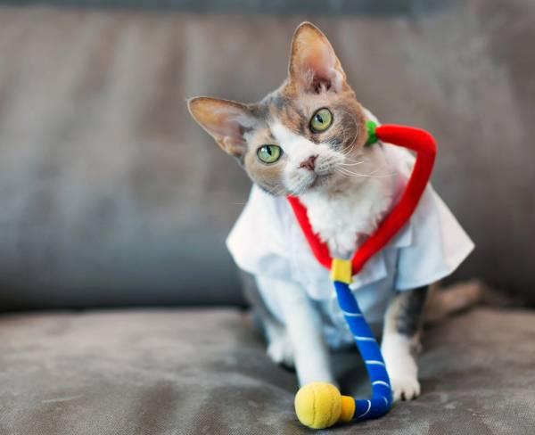 Как избавиться от блох у кошки
