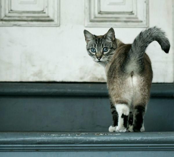 Геморрой у котенка как лечить