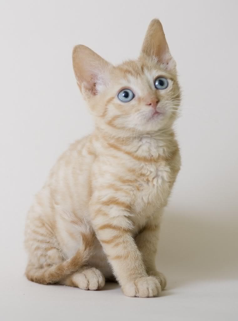 под картинки немецких кошек может видеть данные