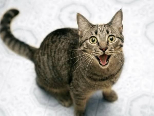 Геморрой у кошек: симптомы и как лечить заболевание
