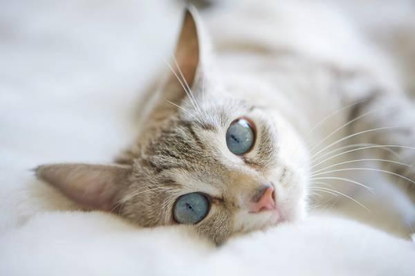 рак кости у кошек лечение